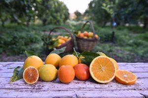 Fior d'Arancia - Arance di Sicilia